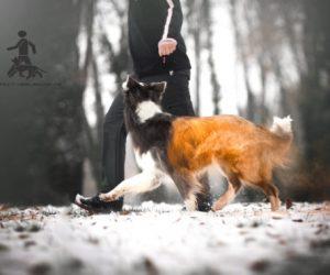 Perfect Heelwork©  Trainerausbildung in Deutschland 2019